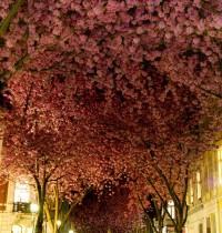 ドイツ、ボン市